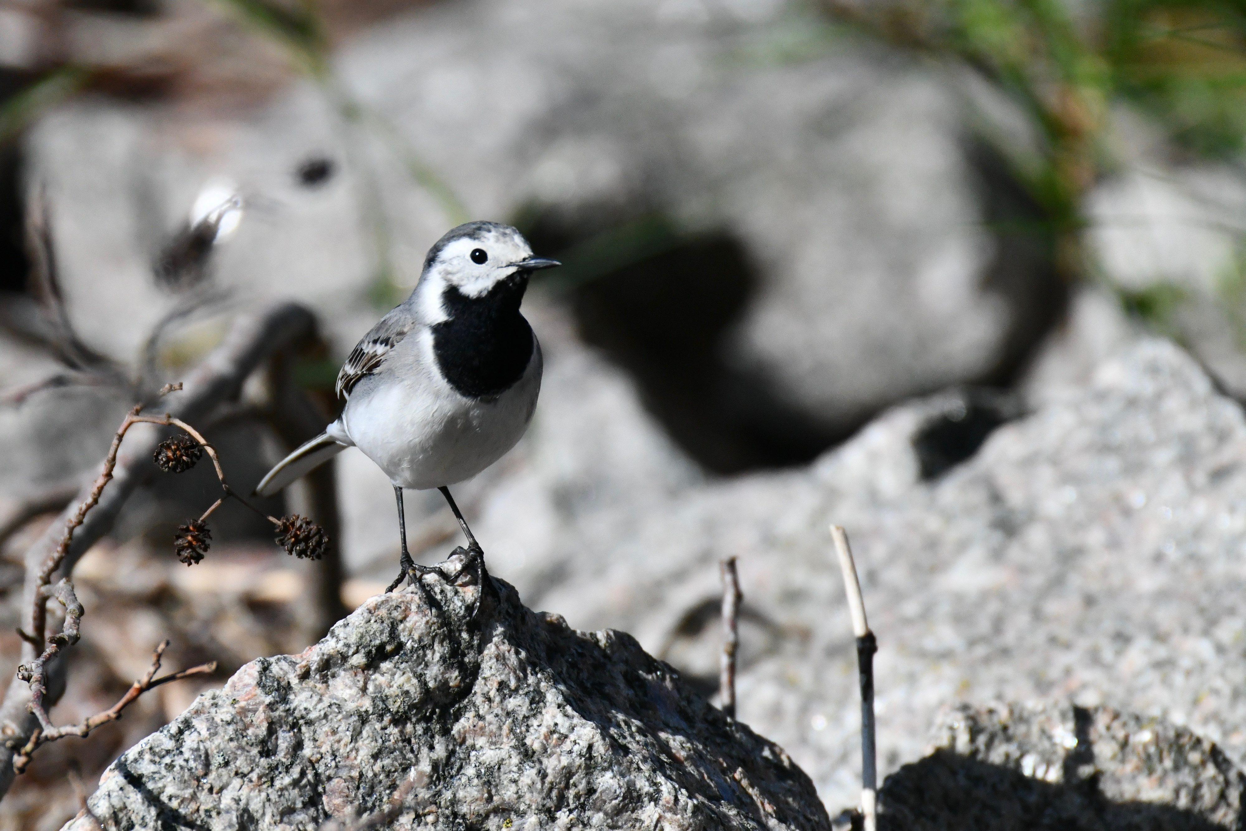 Bild - Fåglar i Thomas hemmamarker