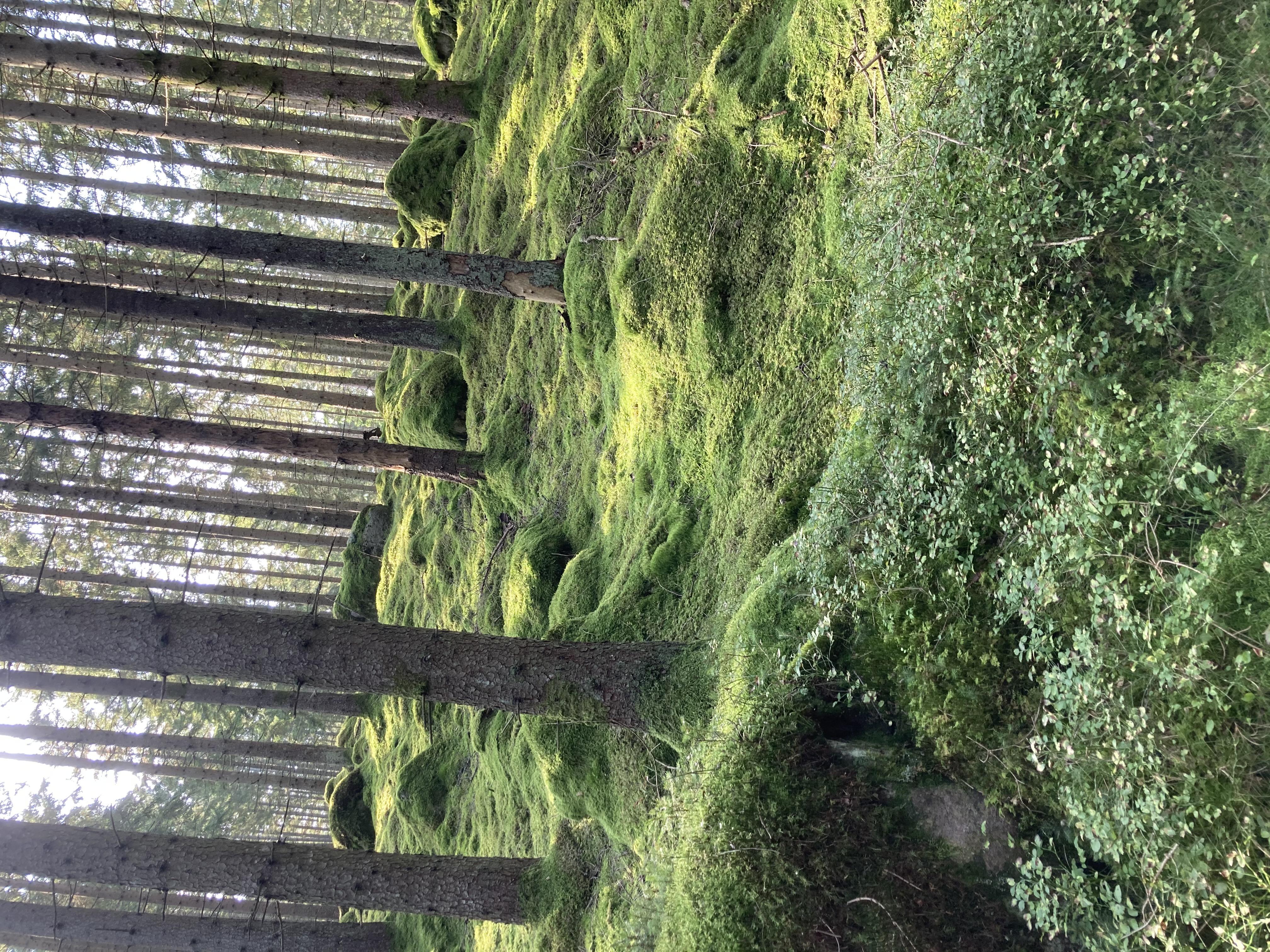 Bild - Råbockarundan, vandring vid Immeln