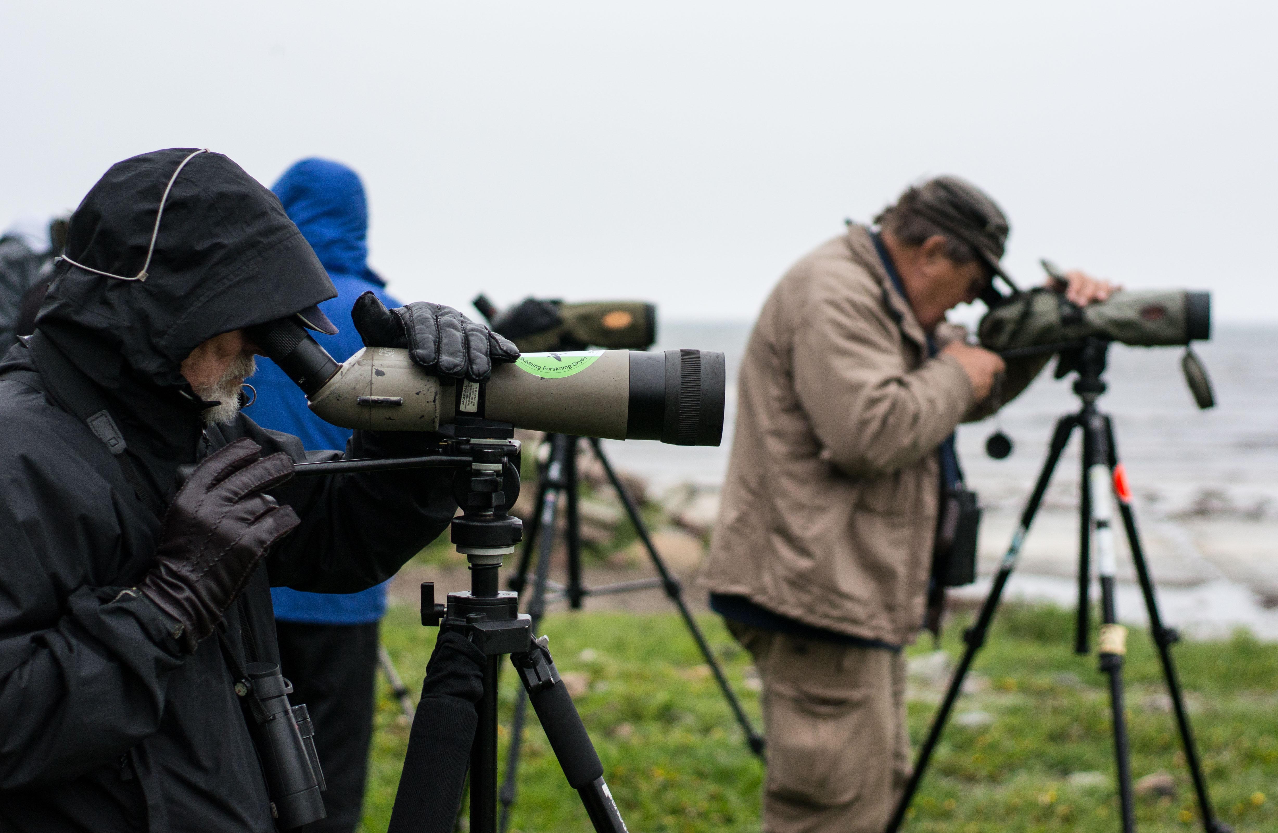 Bild - Fåglar på Kråkenabben.