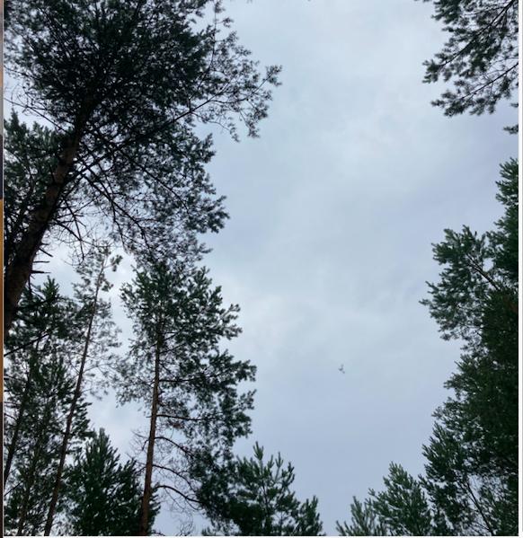 Bild - Vårfåglar