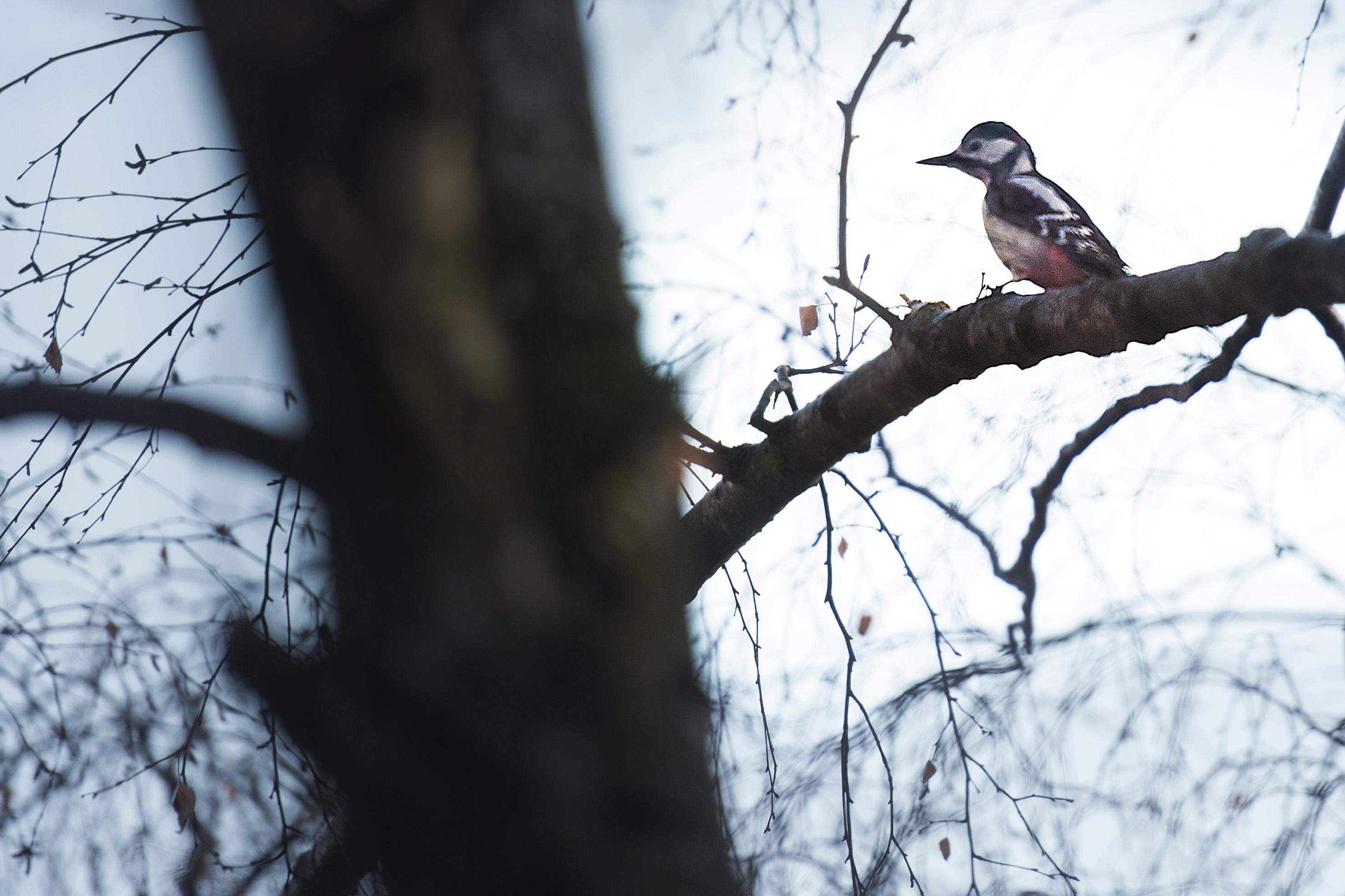 Bild - Linnérundans fåglar